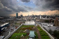 rooftop farm in Brooklyn, New York....Top 5 Of The Greatest Urban Rooftop Farms — The Pop-Up City
