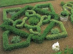 images about knot garden on Pinterest Knots