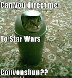 Best cosplay cat ever?