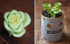 Selderij hergroeien - Keep growing your own celery