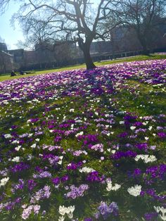 Easter in Aarhus. Spring in Denmark. ❤️  #easter #ostern #dänemark