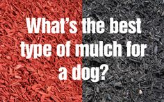Is there a perfect type of mulch for a dog?
