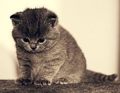 I really don't know what's gotten into me lately....I ususally HATE cats, but i've been finding them soo adorable recently.