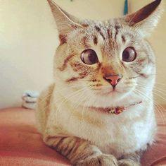 Милые котики, которых любить нужно не за внешность