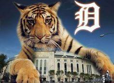 Detroit Tigers                                                                                                                                                     More