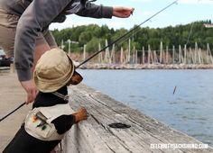 The attentive fisherman http://www.celebritydachshund.com/2014/07/23/dachshund-canoeing-camping-mining/