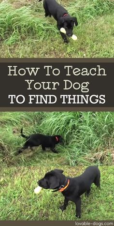 How To Teach Your Dog To Find Things via @KaufmannsPuppy