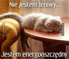 The Truth About Homemade Energy Saving Systems Cute Cats And Dogs, Cool Pets, Wtf Funny, Funny Cute, Funny Animals, Cute Animals, Polish Memes, Weekend Humor, Colors For Dark Skin