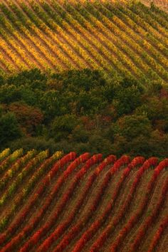 Lo splendido foliage autunnale del Chianti Italia