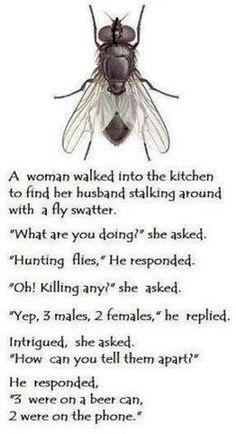 Funny joke - Fly in kitchen