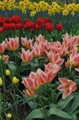 Keukenhof Lisse Garden stripes Tulip time | 3 ways to feel the bloom in the Netherlands | Oregon Girl Around the World