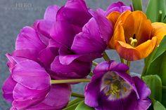~~springtime - tulips~~