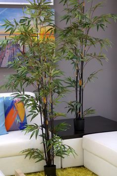 Coco's Plantation 6' Japanese Bamboo Tree