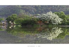 위양지 Architecture Old, Beautiful Scenery, Landscape, Travel Ideas, Places, Nature, Korean, Gardening, Paisajes