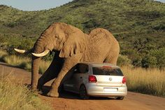 Elephant uses car to scratch an itch - BT
