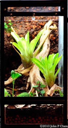 10 gallon vertical dartfrog terrarium construction Frog Habitat, Dart Frogs, Vivarium, Reptiles And Amphibians, Tree Frogs, Terrarium, Habitats, Tanks, Tropical
