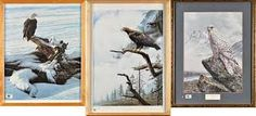 Birds of Prey by Alan M Hunt Image result for alan m hunt Owl Species, Rare Species, Yeti Stickers, Phone Stickers, Salzburg, White Tailed Eagle, Short Eared Owl, British Wildlife, Cute Mugs