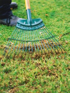 How to Treat Your Lawn in the Fall!  If you need some landscaping done around your house or workplace, call Lawn Tigers Landscaping in Walled Lake, MI at (248) 669-1980 to schedule an appointment TODAY or visit our website www.lawntigers.net for more information!