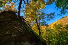 Vermonts Smugglers Notch Tree Living In Rock by Jeff Folger