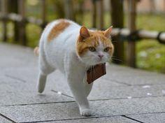 Twitter / nyalan_jalan: し、ししょ〜! 待ってください〜にゃ〜。