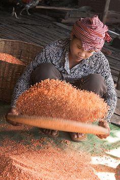 drying shrimp in Cambodia