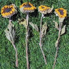 Let's celebrate the first day of Summer with my favorite summer flower- Sunflowers! These dried sunflowers add a pop of color to your summer decor. They look great paired with dried wheat and other grains, blue larkspur, and pearly everlasting in bouquets, wreaths, and arrangements. Or they are also super cute alone in a mason jar tied with burlap ribbon for an American Farmhouse look. Celebrate summer today!  DriedDecor.com #sunflower #summersolstice #homedecor #driedflowers