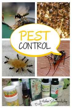 Get rid of the itch in mosquito, chigger, black fly or other insect bites, try a homemade natural insect repellent, and get rid of ants, wasps, and fruit flies without toxic chemicals.