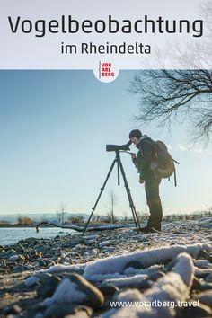 Im Europaschutzgebiet Rheindelta lassen sich zahlreiche Vogelarten aus nächster Nähe beobachten. Wir haben Ornithologin Johanna Kronberger bei ihrer Tour am Bodensee begleitet. Das Hotel, Bird Watching, Hiking Boots, Mountains, Nature, Travel, Winter, Europe, Birdwatching