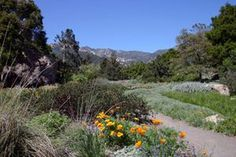 Santa Barbara Botanic Garden.  Interested in our native plants and local ecology?  The Botanic Garden is worth a stop.