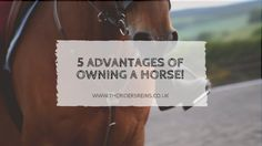 I was reallyappreciating my horses today so I thought I would share some advantages of owning horses!  1. Fitness!  If you ar...