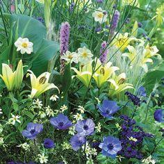 Bienenparadies 'Happy Bee' - 25 Stück. Anemone blaues Mädchenauge weiße Dahlie Prachtscharte zitronengelbe Lilie Gräser
