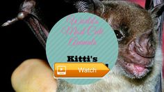 Worlds Most Cute Animals Kittis Hognosed Bat  Worlds Most Cutest Animal If Kittis Hognosed Bat is your favorite Like and Comment below and explain why If not Like and Comment too  on Pet Lovers