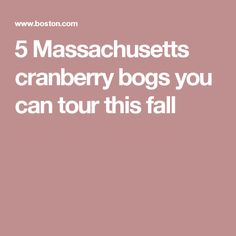 5 Massachusetts cranberry bogs you can tour this fall