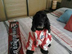 Turco, an Atlético de Madrid fan @ Madrid
