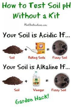 So you've started your very own vegetable garden, but now you realize that different vegetables require different soil pH! So how to test soil pH without a kit? Is your soil more acidic or more… Garden Types, Garden Compost, Garden Soil, Lawn And Garden, Garden Fencing, Garden Care, Fruit Garden, Porch Garden, Moss Garden