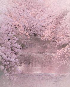 sakura, spring, flower, Japan is part of Cherry blossom - Beautiful World, Beautiful Places, Blossom Trees, Cherry Blossoms, Sakura Cherry Blossom, Flower Aesthetic, Aesthetic Yellow, Aesthetic Pastel, Aesthetic Grunge