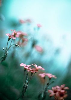 High aperture was used to place focus on the flowers in the foreground and create a narrow depth in the field of view