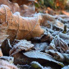 Freezing cold.   #uwn_holland  #super_holland  #wonderful_holland  #instanetherlands  #holland_photolovers  #dutch_connextion  #ig_discover_holland  #ig_exquisite  #pocket_trees  #amazingphotohunter  #colors_of_day  #fantastic_earths  #ig_fotografdiyari  #ig_world_colors  #heart_imprint  #gottolove_this  #worldbestgram  #fotocatchers  #fotofanatics_nature_  #royalsnappingartists  #fiftyshades_of_nature  #ig_photostars  #dc_vorst16  #tree_magic  #tree_brilliance  #discovernaturee…