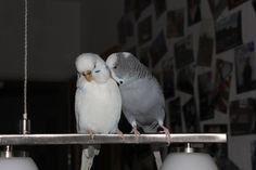kissing and cuddling by myfriendrudi.deviantart.com on @deviantART