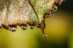 Colorful Rain Drops by Shannon Skalisky on 500px