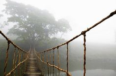 Rope Bridge Art Print featuring the photograph Jungle Journey by Skip Nall Frames On Wall, Framed Wall Art, Wall Art Prints, Canvas Prints, Framed Prints, Rope Bridge, Juan Les Pins, Suspension Bridge, Style Tile