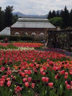 Spring at Biltmore Estate, Asheville, NC
