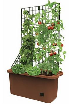 Self Watering Planter Vegetable Patch Garden Patio Mobile Deck Vertical Grower . at Products Lists of Tools and Hardware - self watering planter vegetable patch garden patio mobile deck vertical grower Vegetable Planter Boxes, Tomato Planter, Planter Box With Trellis, Tomato Trellis, Vertical Vegetable Gardens, Garden Planter Boxes, Patio Planters, Garden Trellis, Raised Planter