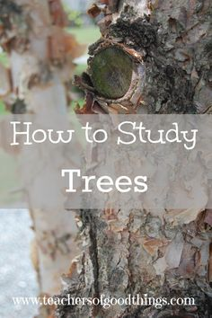 How to Study Trees