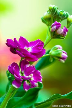 Flowers at home - EXPLORED!!  :-) by Rudr Peter   Smile to the world  , via Flickr