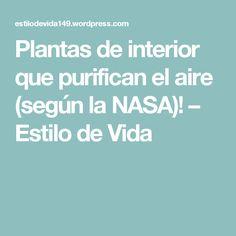 Plantas de interior que purifican el aire (según la NASA)! – Estilo de Vida
