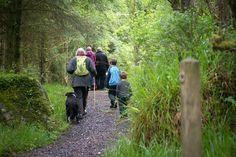 Walking in Glenfarne Forest with Leitrim Landscape Walks