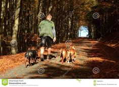 On assignment MY NEIGHBORHOOD:  Walking the dogs, the forest path near the village Black River
