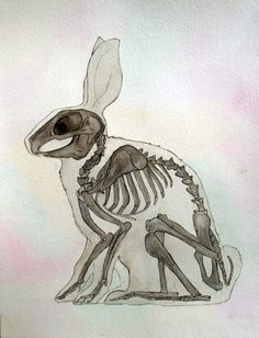 Rabbit, watercolor painting, bunny, skeleton, anatomy, animal art, art, painting, drawing, picture