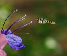 Macro photography tips with example photographs and images | { Sunday Photographer }